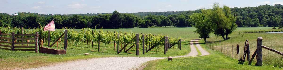 Westphalia Vineyards